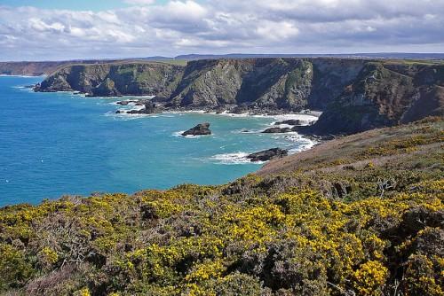 Shags Nesting Godrevy Coastline